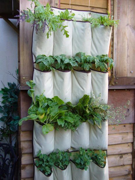 Apartment & Vertical Gardening is part of Vertical garden diy, Vertical garden design, Vertical herb garden, Vertical vegetable garden, Vertical garden, Small space gardening - Vertical gardening designs make use any available space along a sunny wall to grow vegetables, herbs, flowers, and root crops in suspended containers