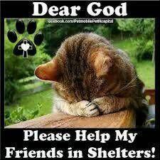 memphis pets - craigslist | Pets, Cats, Cute animals