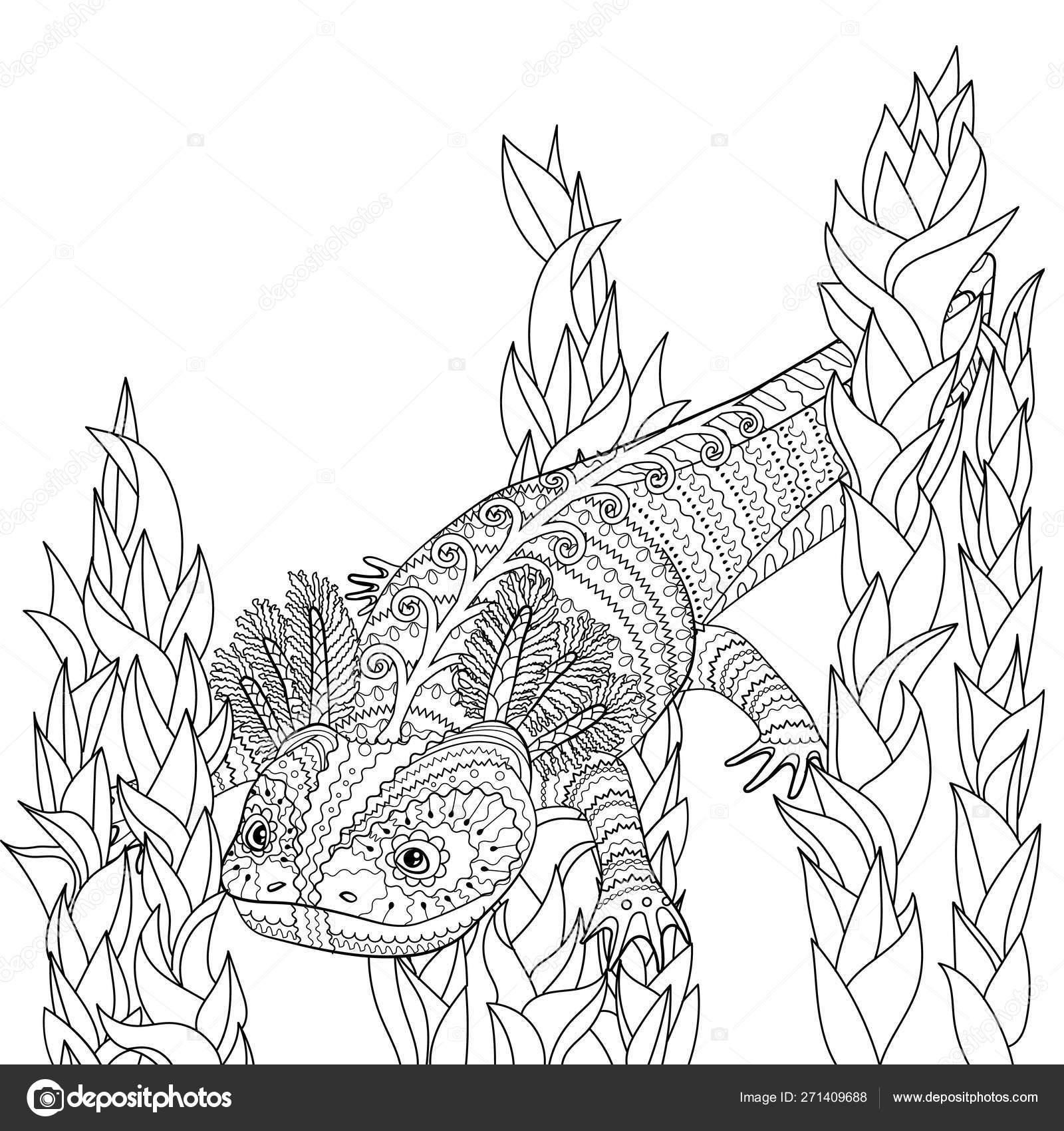 38 Axolotl Coloring Page Coloring Pages Animals Black And White Black And White Illustration