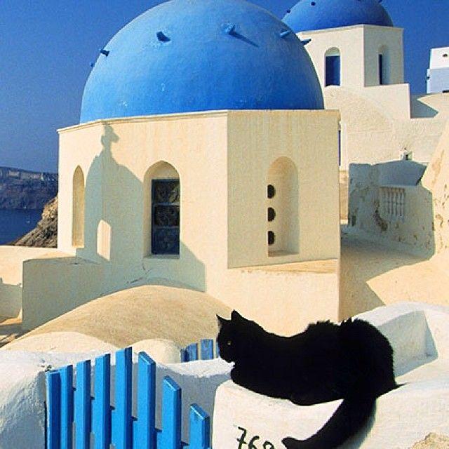 Wallpaper: Black Cat and Blue Domed Church, Oia  Village, Santorini Island, Greece www.webshots.com
