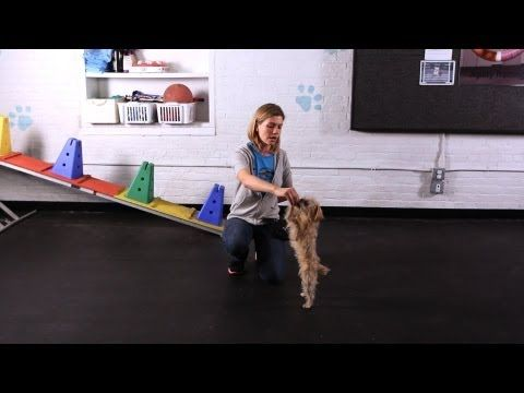 How To Teach Your Dog To Dance Dog Tricks Youtube Dog Hacks