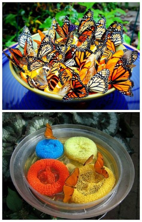 Butterfly Feeder Food   Instant Feeder For Your Garden Made From Sponges  And Plastic Plate.