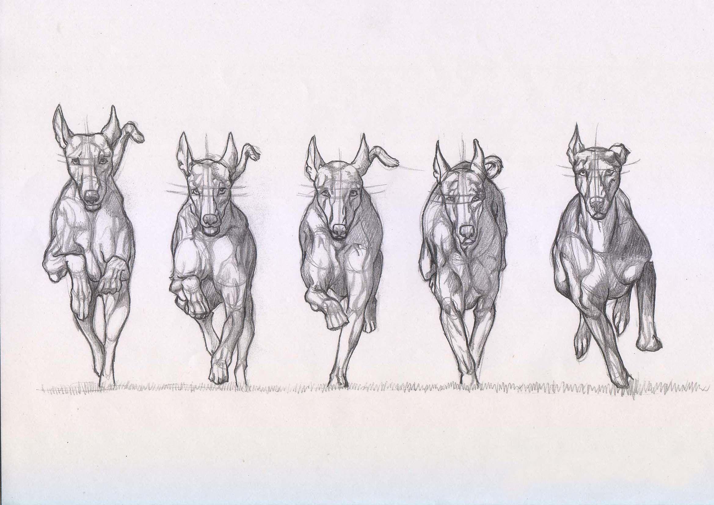 Pin de se en Dog drawings | Pinterest | Dibujo, Dibujos de animales ...