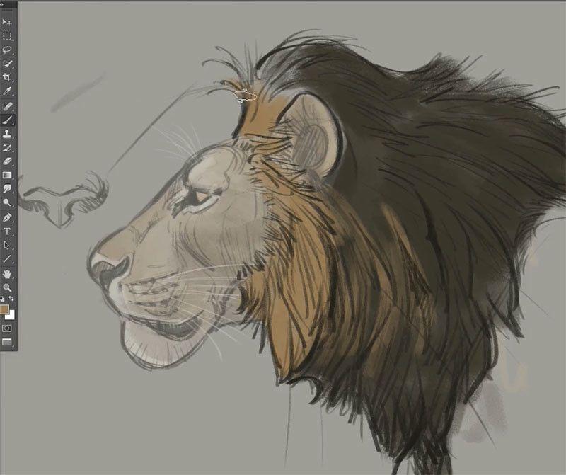 Anatoref Drawing Big Cats Draw Pinterest Drawings Animal