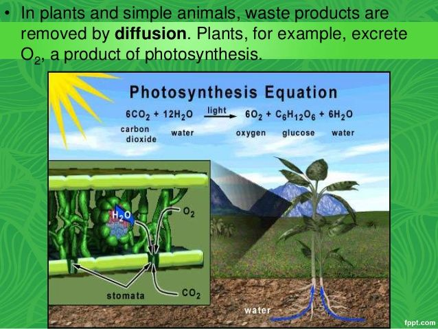what is diffusion in plants