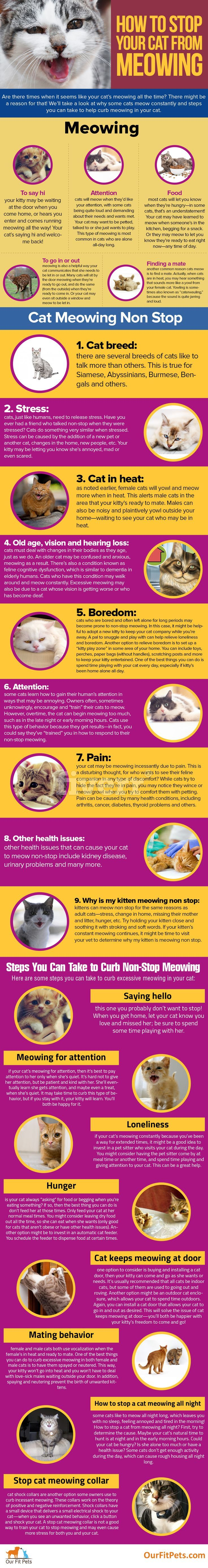 How To Stop Your Cat From Meowing Our Fit Pets Cat Advice Meows Cat Breeds
