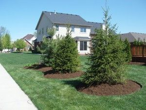 Mulch Landscaping Under Pine Trees