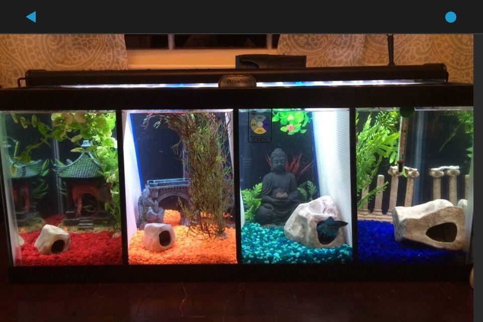 Imgur Fish Tank Decorations Betta Fish Tank Cool Fish Tanks