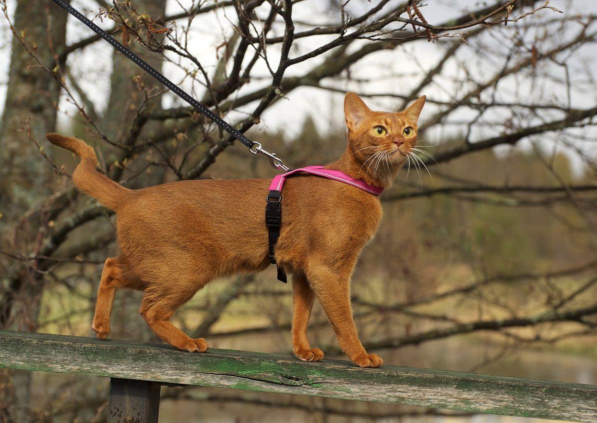 Feel Purrr Kissanvaljas On Ergonominen Ja Kevyt Valjas Kissalle Feel Purrr Cat Harness Is Ergonomic And Light Harness For Cat