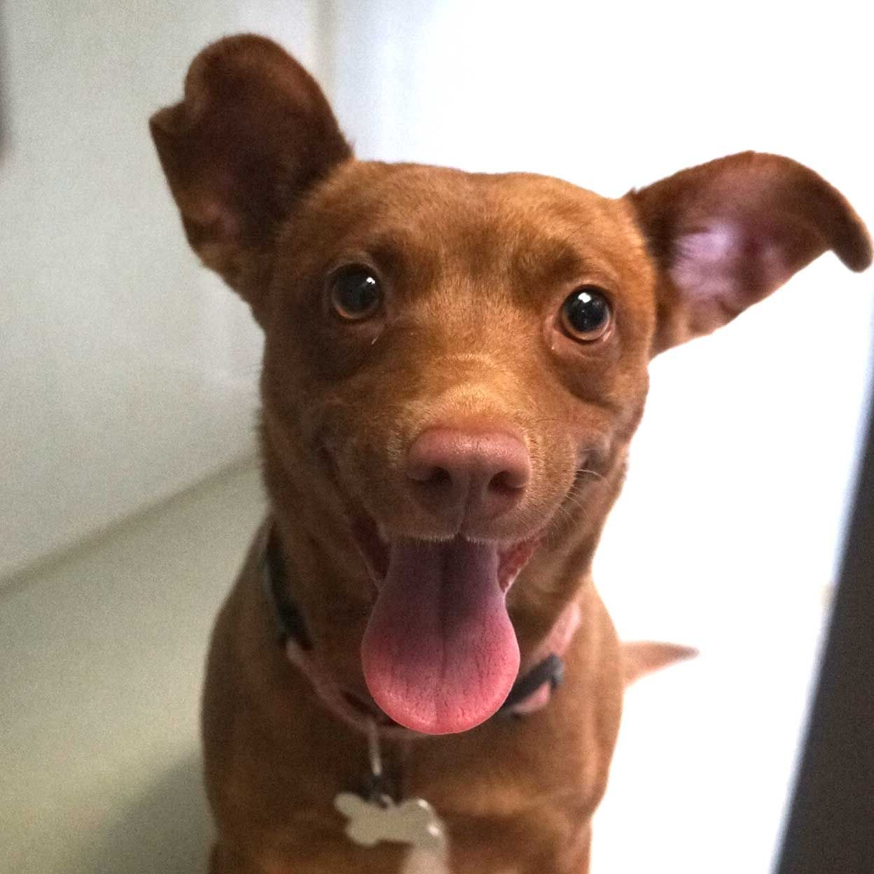 Adopt a Pet (With images) Cat adoption, Animals, Dog