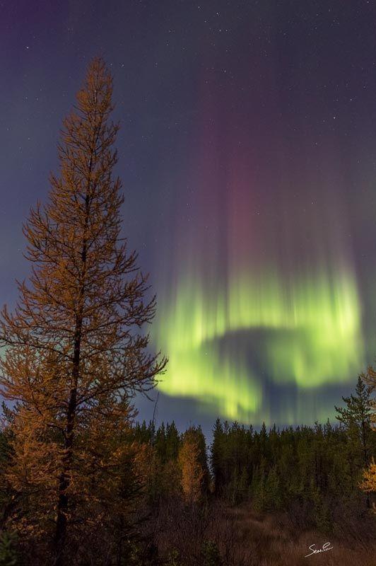 Sell Wallpaper Northwest Arctic: Northern Lights Horseshoe
