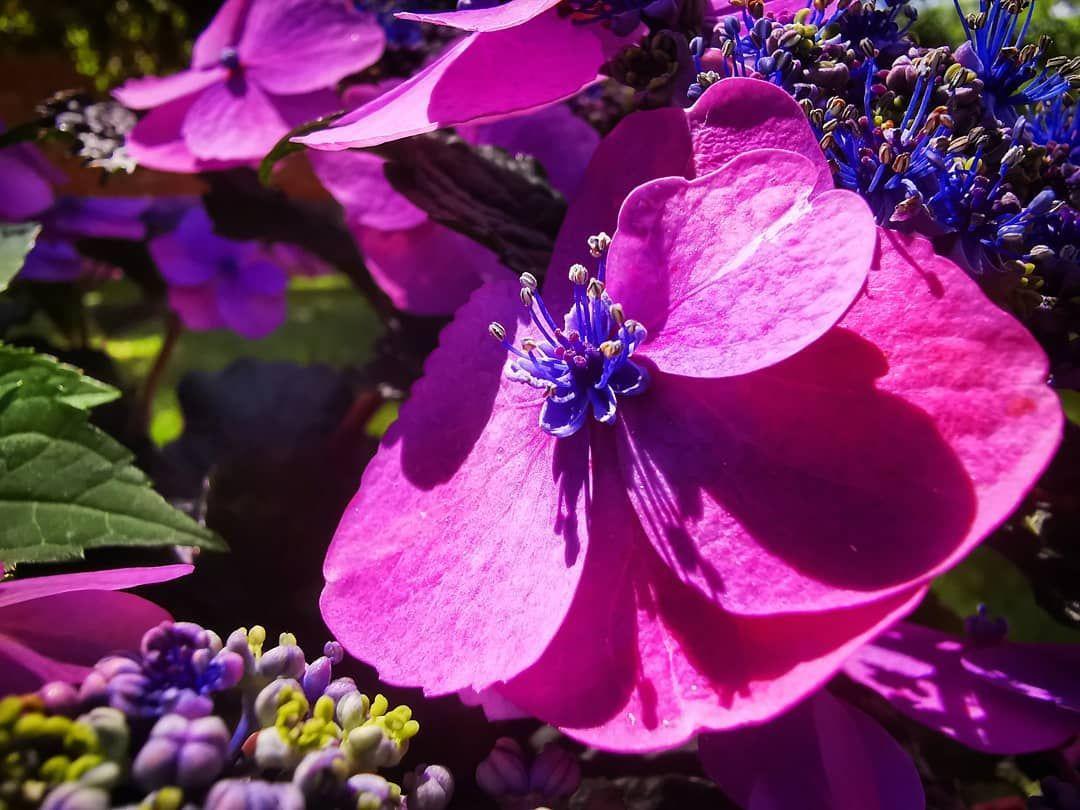 #flower #flowers #flowerlover #flowerlovers #flowerstagram #flowerlove #instaflower #instaflowers #flowersofinstagram #flowerpower #flowerphotography #nature #natur #naturephoto #naturephotography #blumen #nature_perfection #photo #photos #photooftheday #photographyislife #photography #instaphoto #instaphotos #photoshoot #instaphotography #instanature #fotografia #summer #july
