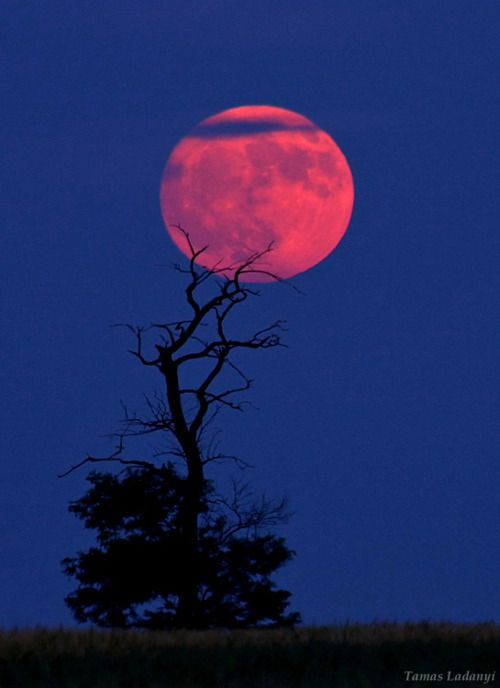 pink moon on its way tonight?