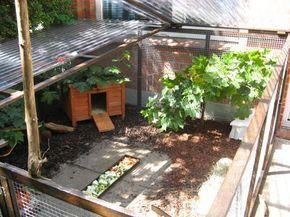 Pin on guinea garden