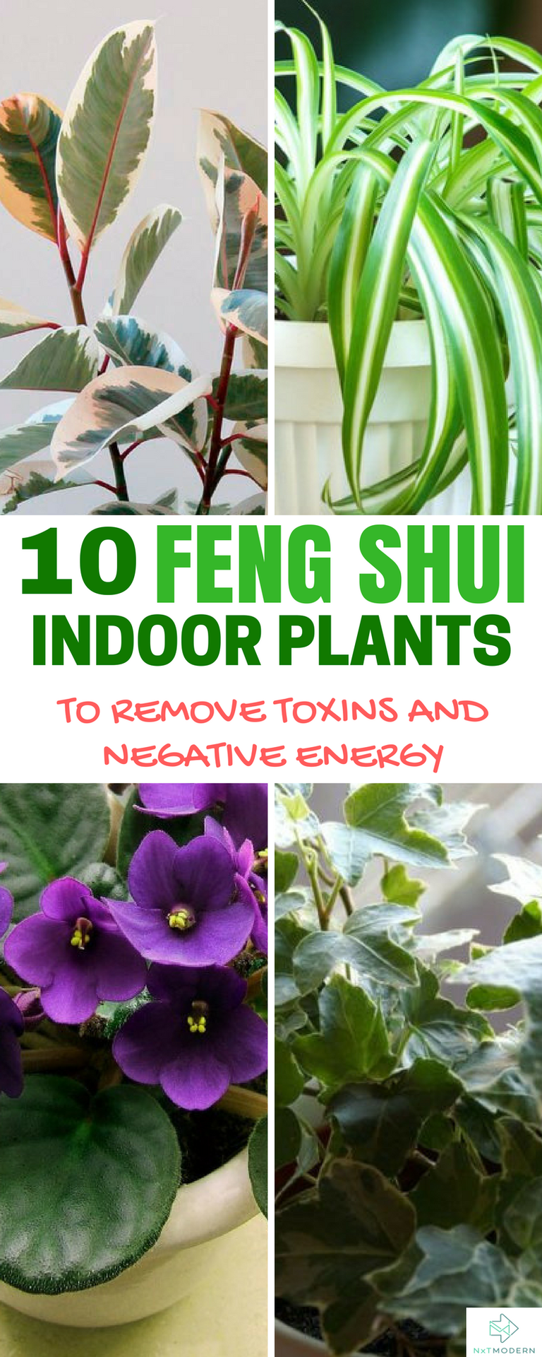 10 Feng Shui Indoor Plants To Spruce Up Your Interior Decor Feng