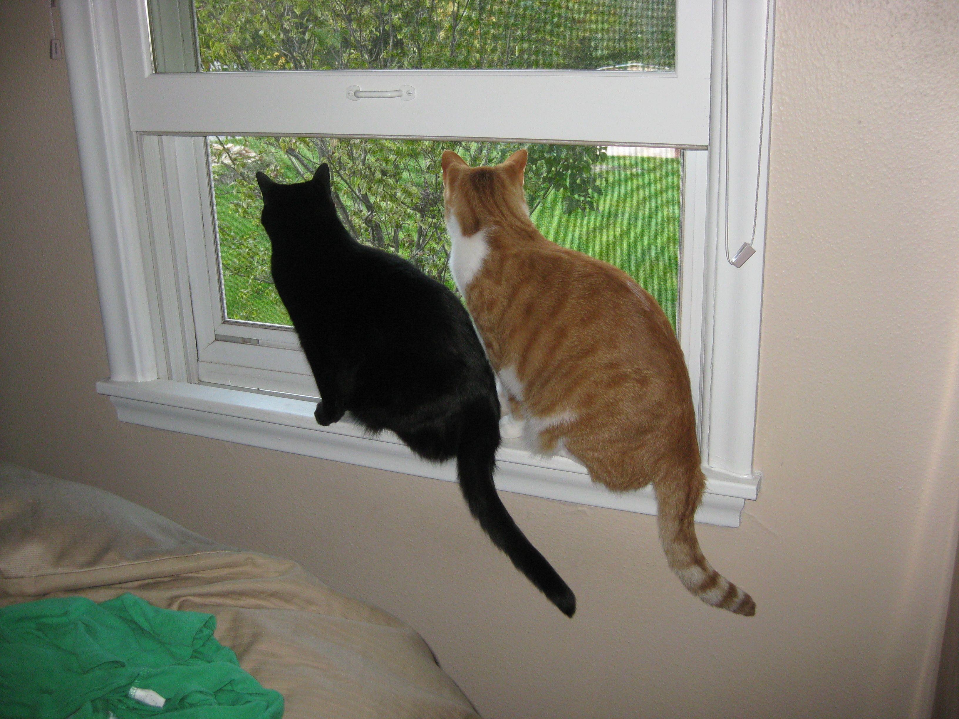 Loren's Kitty cats bird watchin