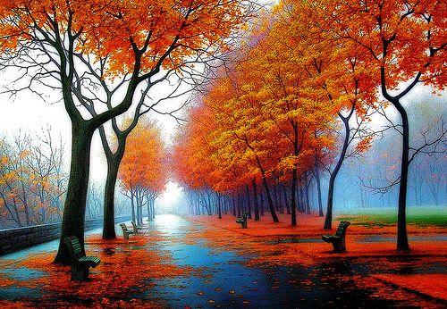 Autumn Leaves and Rain, Calgary, Canada     photo via chikuzen