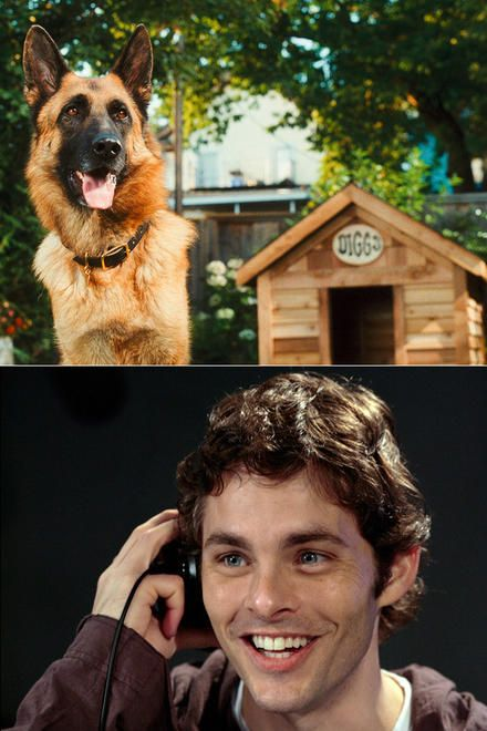 James Marsden In Cats And Dogs The Revenge Of Kitty Galore Recipes From Heaven Celebrities Dog Cat