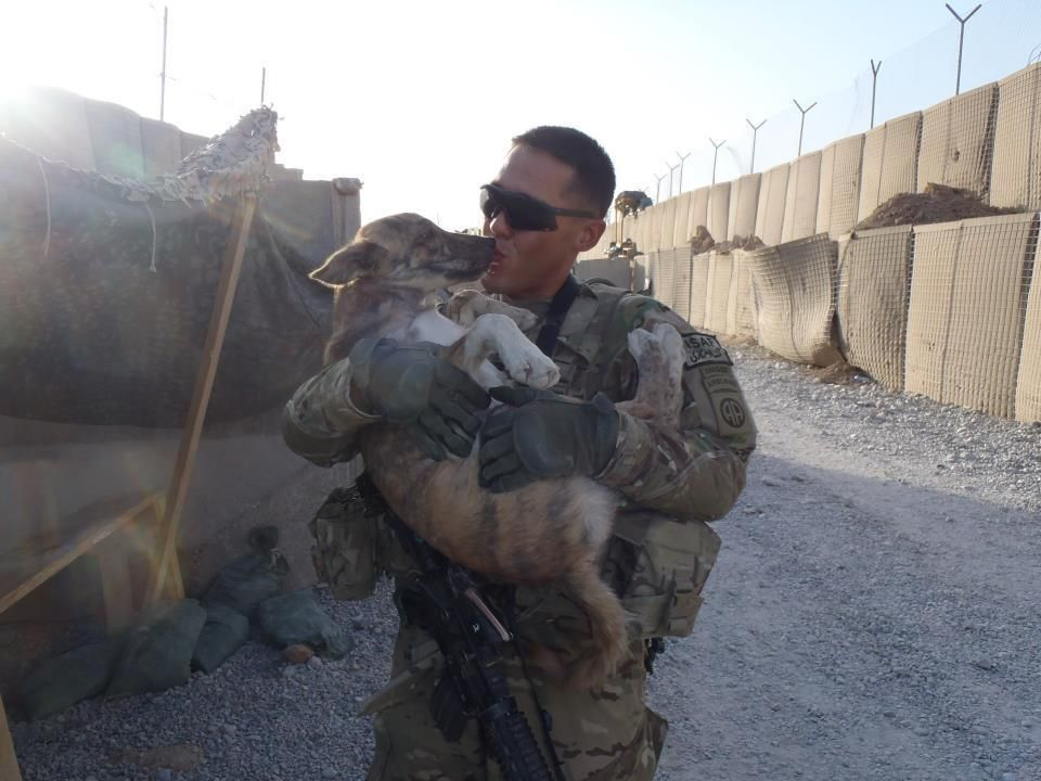18 Loving Animals Who Befriended Soldiers Overseas With Images