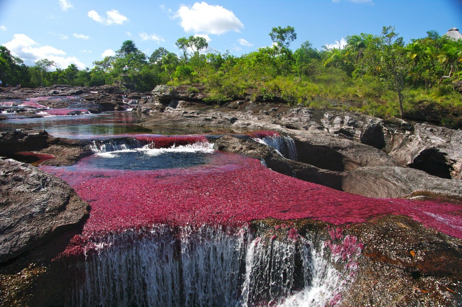 Caño Cristales, Colombia. This river is colored red by an aquatic plant that blooms in the fall.