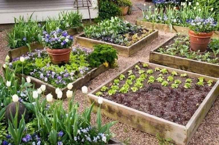 72 Stunning Backyard Vegetable Garden Design Ideas Garden Layout Vegetable Backyard Vegetable Gardens Diy Raised Garden