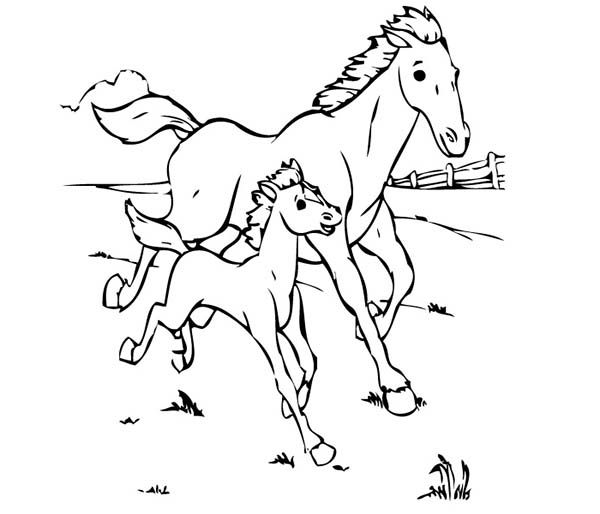 baby horse coloring pages horse baby horse running with his mother in horses coloring page