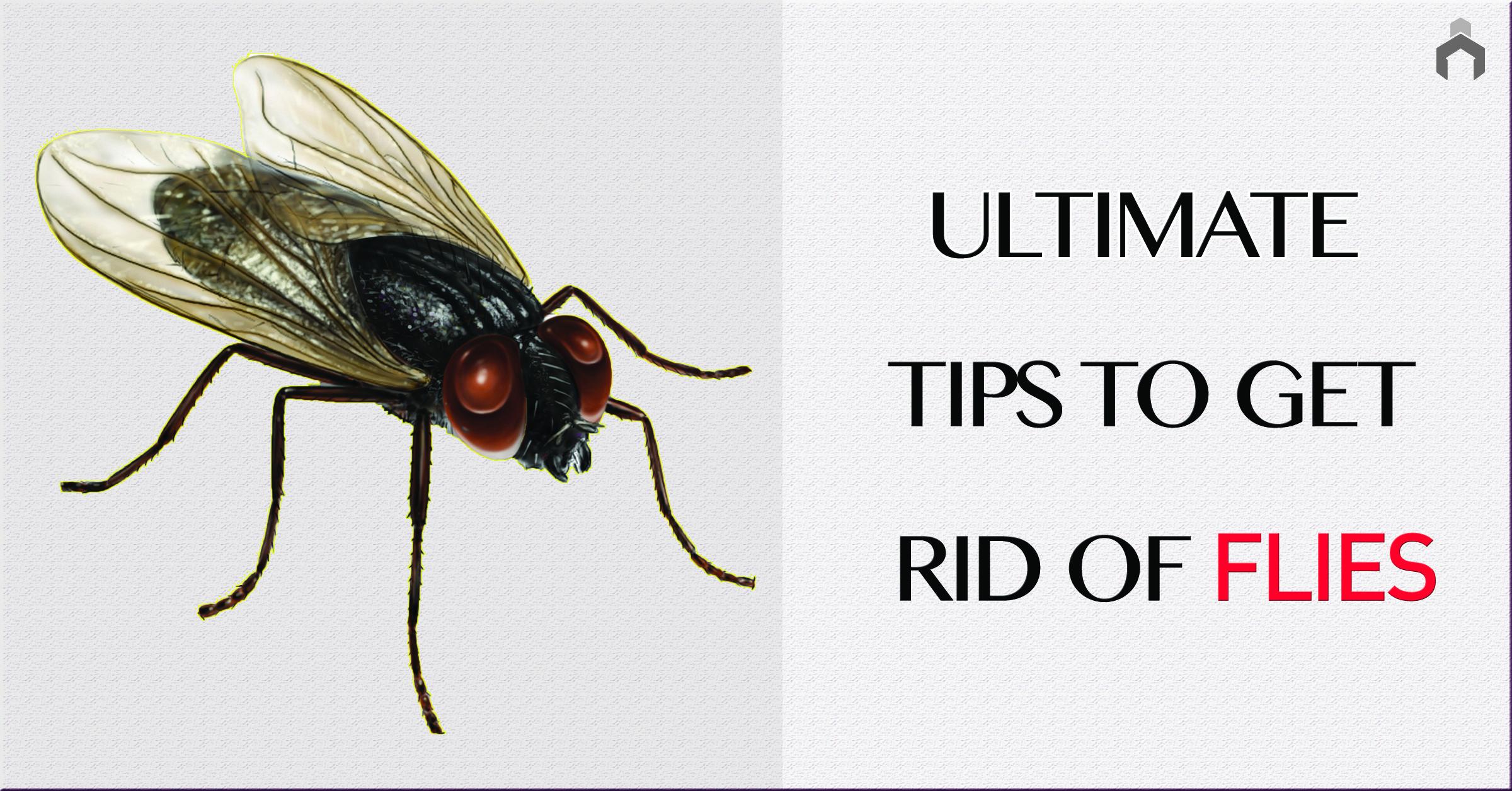Get Rid Of Pesky Houseflies Forever!   Get rid of flies ...