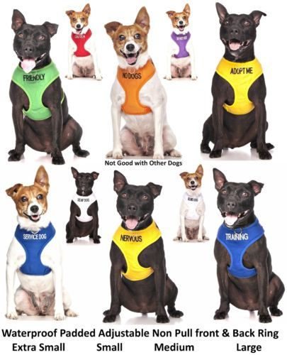 Details About Dog Vest Harness Non Pull Front Back Ring Leash Set