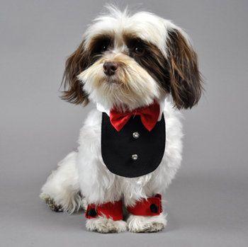 Top Ten Valentine S Day Dog Clothes Valentines Day Dog Boy Dog