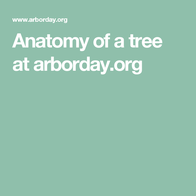 Anatomy Of A Tree At Arborday Forests Trees Pinterest