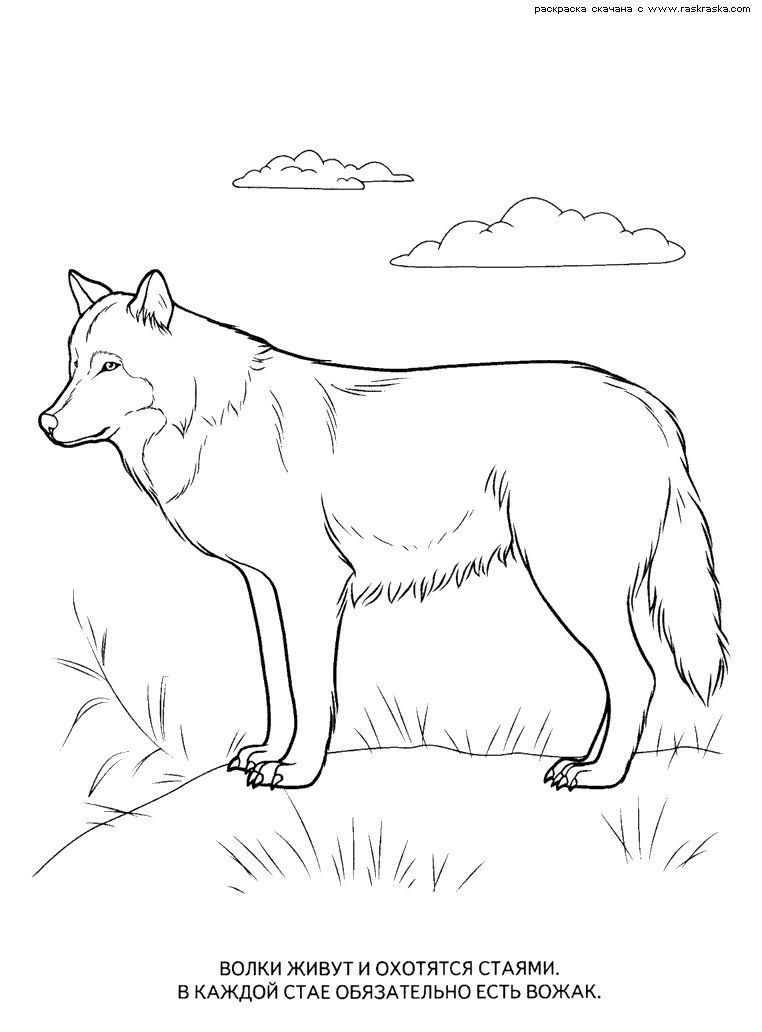 Raskraski Dikie I Domashnie Zhivotnye Pticy Ryby Stranica 9 Dog Coloring Page Animal Coloring Pages Coloring Pages