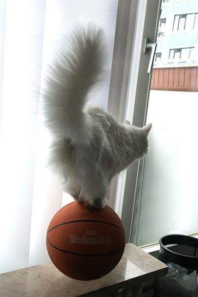 Balance Champion Is Always On The Ball Photo Chat Drole Chien Chat Chats Adorables