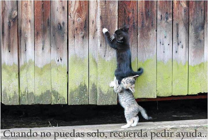 Imagenes De Gatitos Tiernos Con Frases De Amor Imagenes De Gatitos