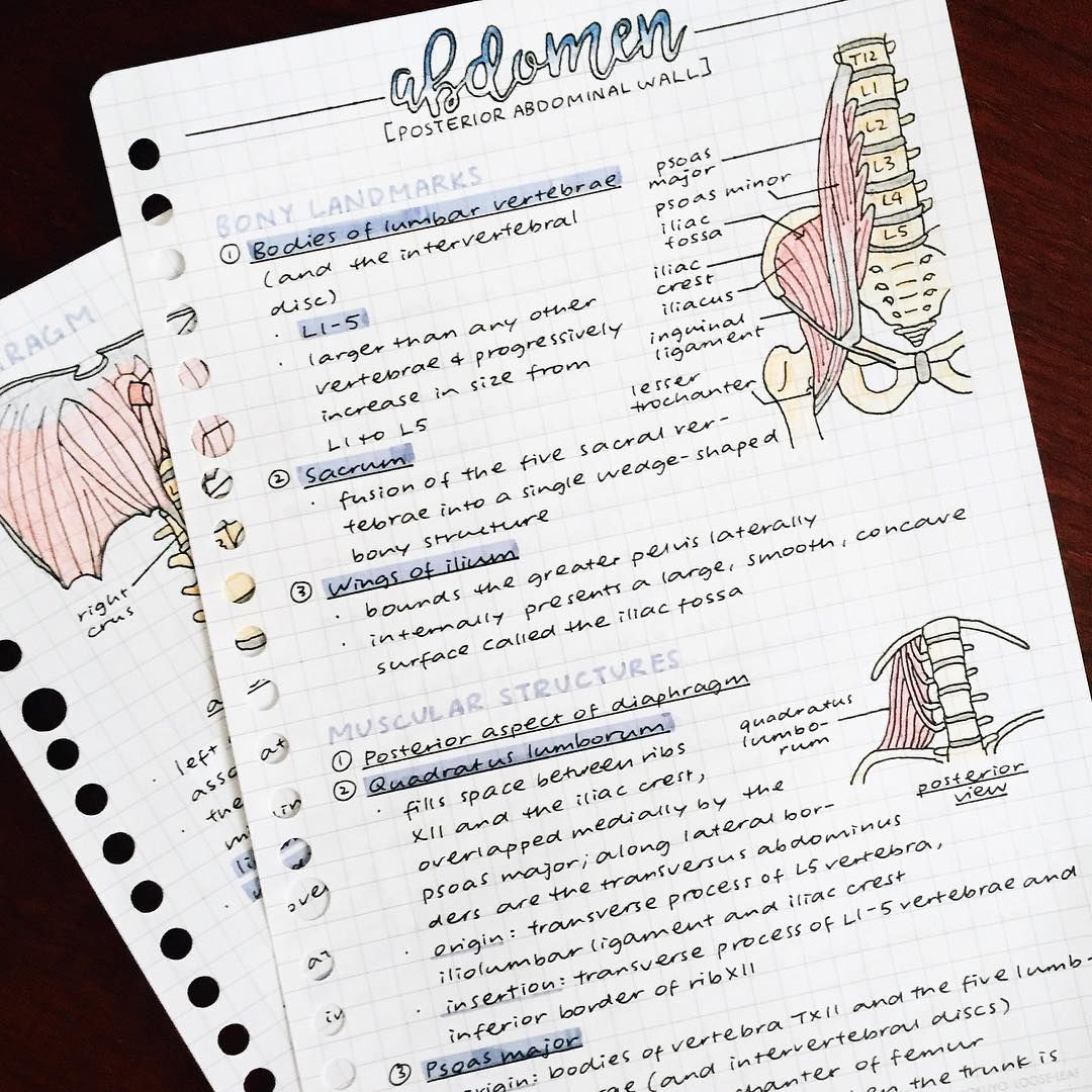 learning next semester\'s anatomy | Bullet Journals | Pinterest ...
