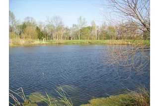 How to clean up a small farm pond pump need to and for Small pond construction