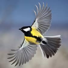 bird - Buscar con Google