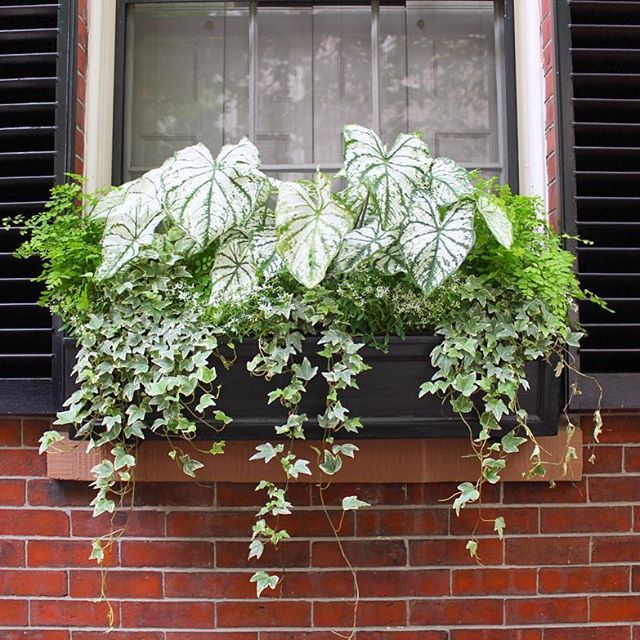 A fresh and lush window box done by the Garden Design team at - diseo de jardines urbanos