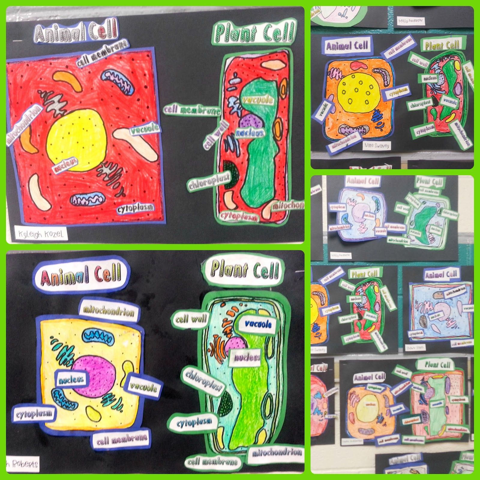 Plant And Animal Cell Activities Us A Classroom Full