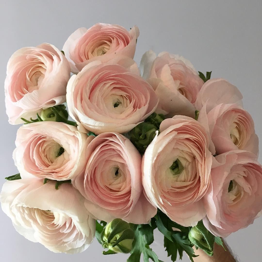 Italian Clooney Ranunculus Are Back Wedding Flowers Pink Roses Ranunculus Wedding Bouquet Ranunculus Wedding
