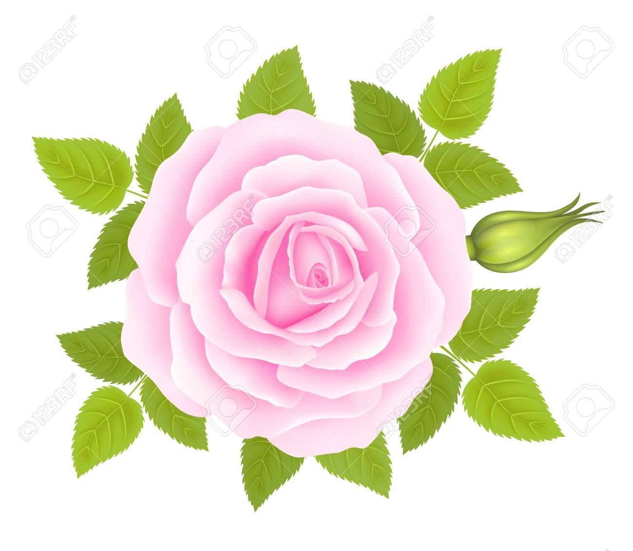 White Background With A Pink Rose Flower Vector Spon Pink