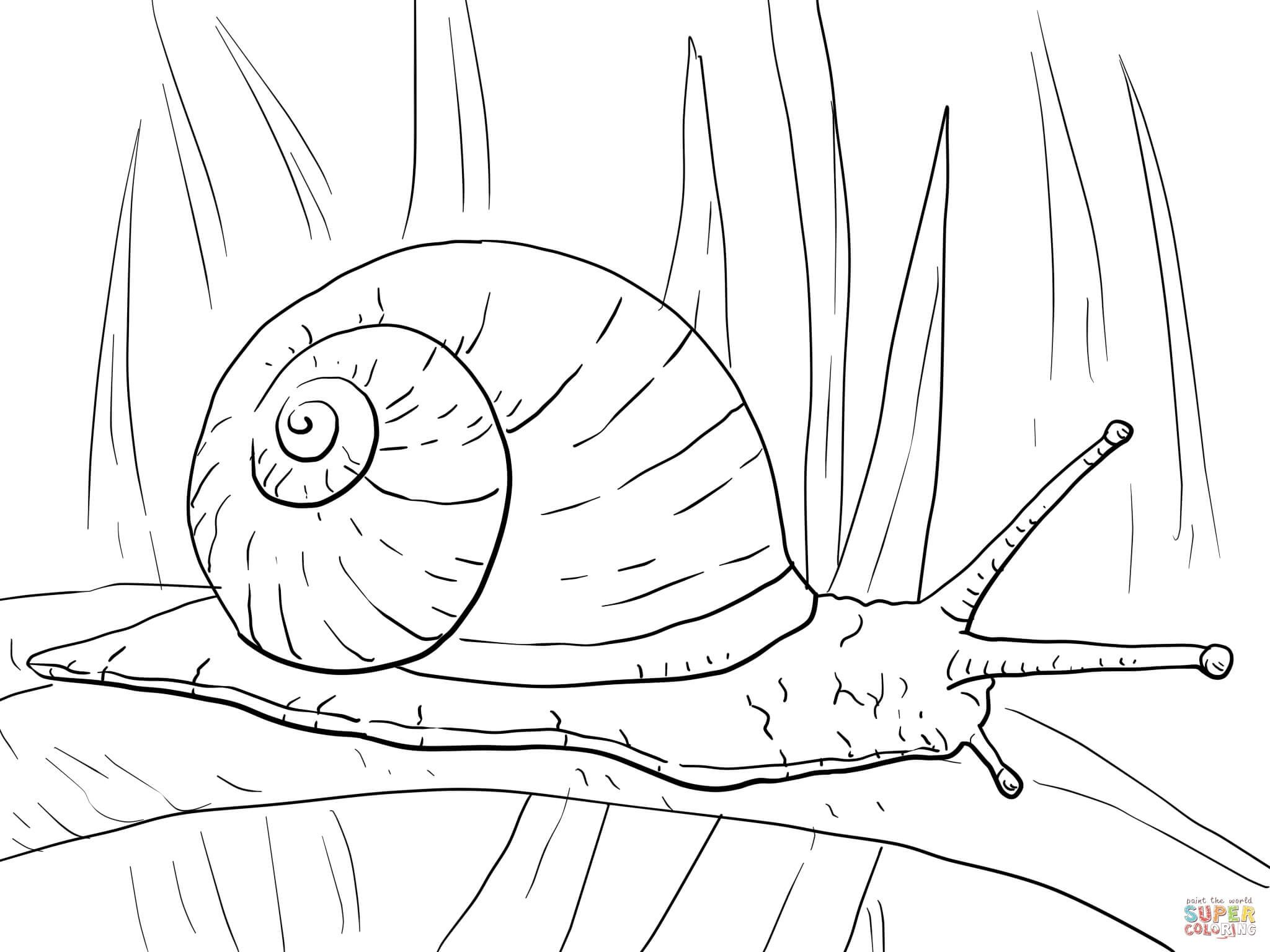Writing Garden Snail Coloring Page Free Printable Coloring Pages