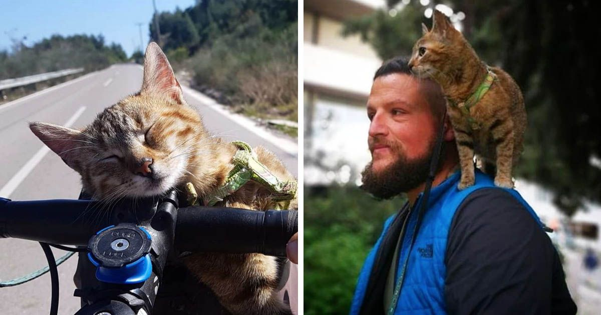 Backpacker Adopts Stray Cat And Takes Her To Travel The