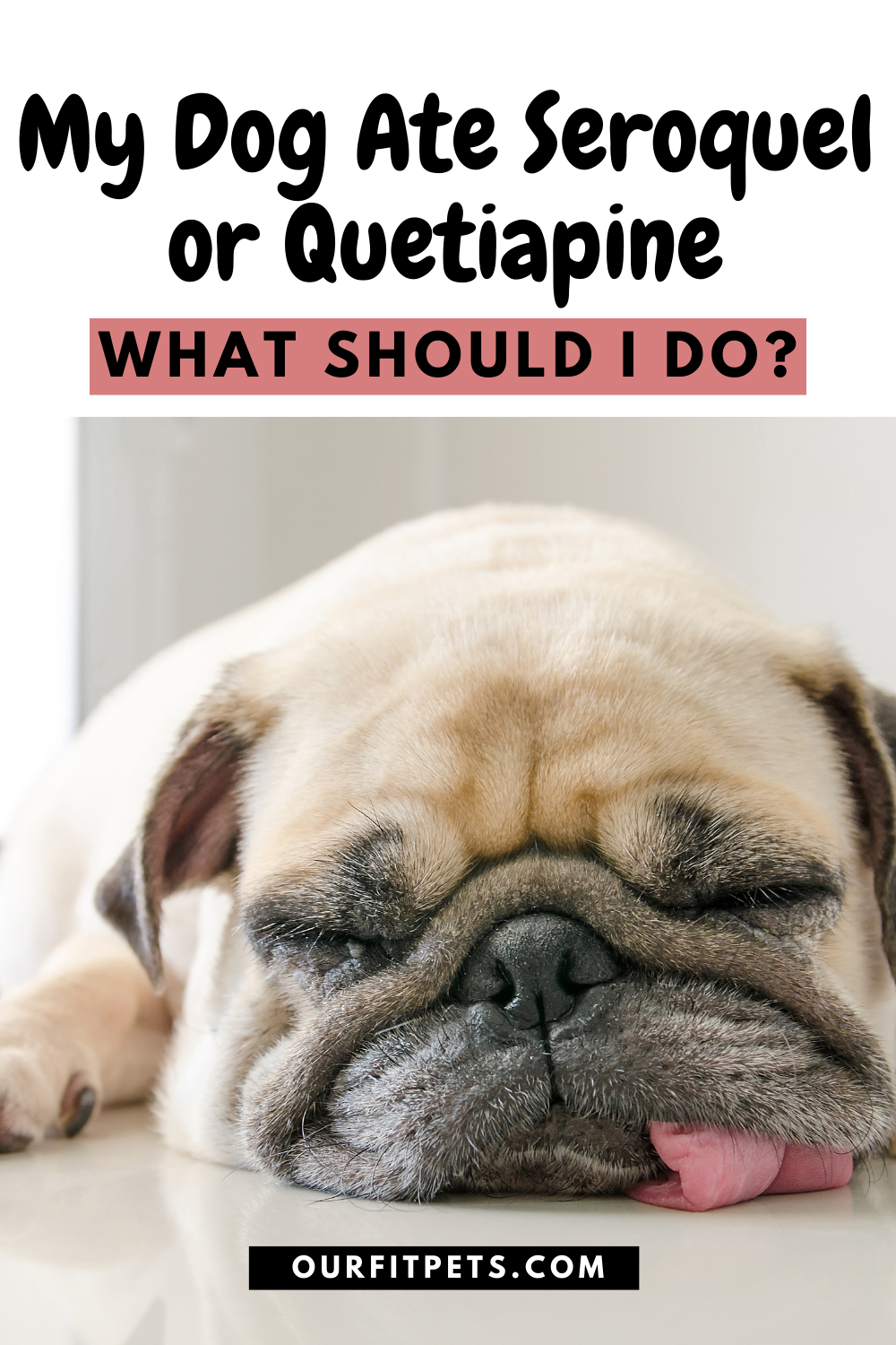 My Dog Ate Seroquel Or Quetiapine What Should I Do Our Fit Pets Sleeping Dogs Dogs Cat Advice