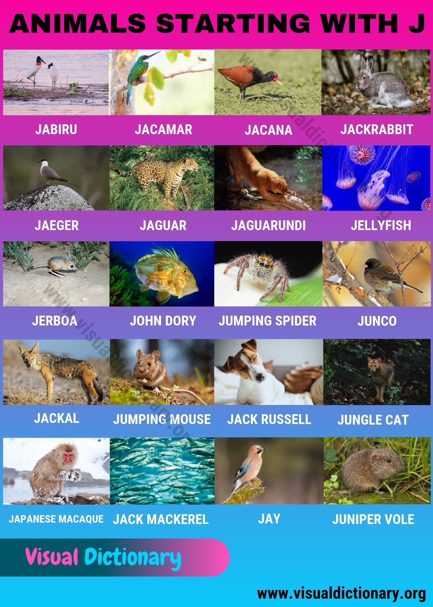 Animals That Start With J Common Names Of 20 Popular Animals Starting With J Visual Dictionary Visual Dictionary Animals Name In English Animals
