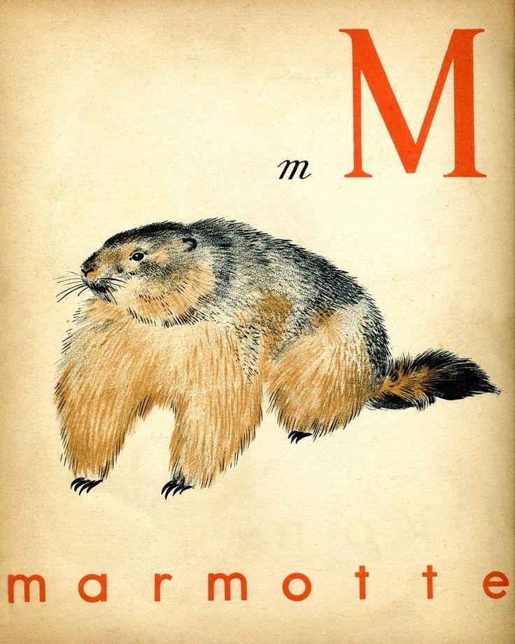 1930s French Alphabet Print M Marmotte Marmot French Alphabet Alphabet Print Alphabet Poster