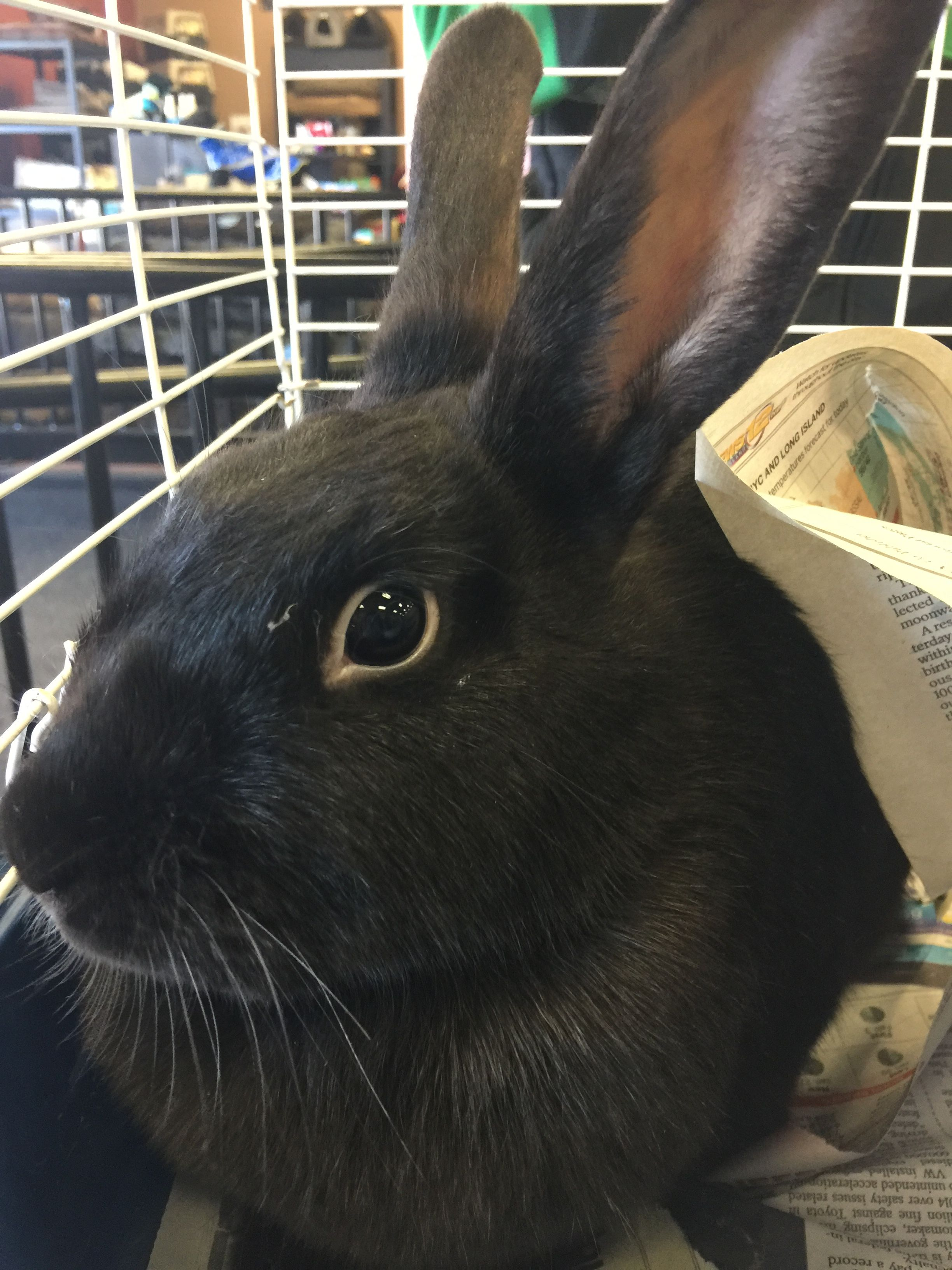 Bunny Rescue Adoption Event At Pet Valu Hauppauge Ny Bunny Rescue Pets Animals