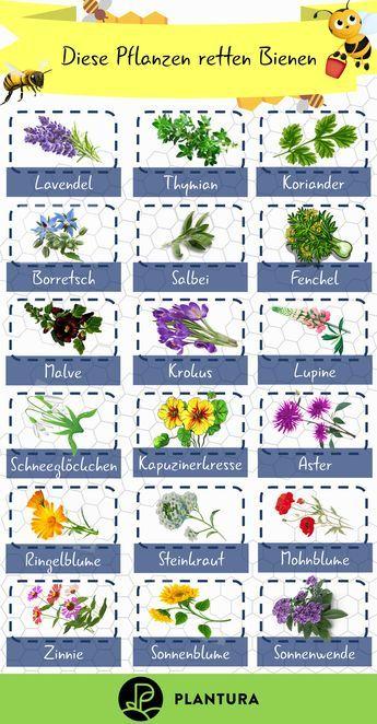 Photo of Bienenfreundliche Pflanzen: Top 10 – Plantura