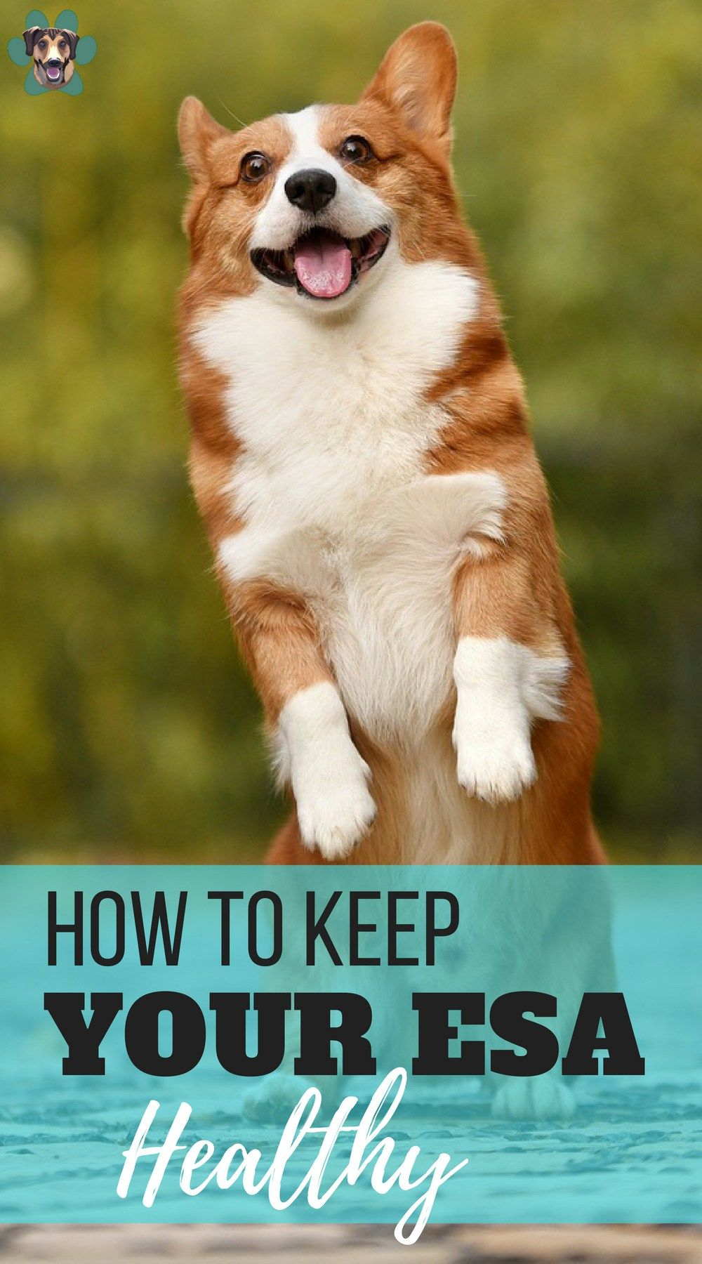 3 ways to keep up with your emotional support dog's health