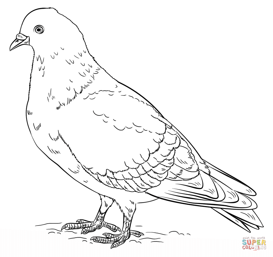 Pigeon Coloring Page Png 875 824 Bird Coloring Pages Minimal Drawings Flower Drawing