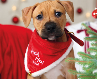 Christmas is coming! Cute baby puppies, Dogs, Sick pets